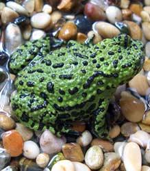 Las mascotas más exóticas: la rana