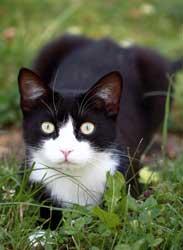 Las mascotas en la familia: el gato