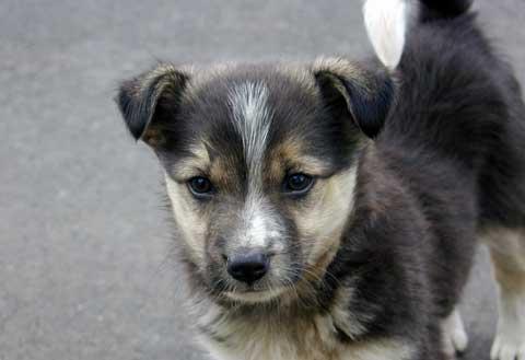 Perros en adopción, la mejor forma de adquirir una mascota « Tu ...