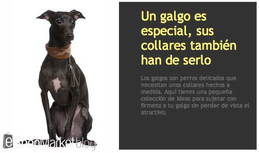 Escaparate destacado de la semana: collares de galgos