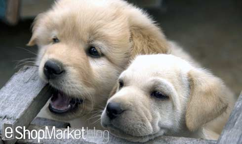 Puppy Parties, clases de socialización para cachorros