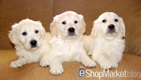 Puppy Parties, socialización de cachorros