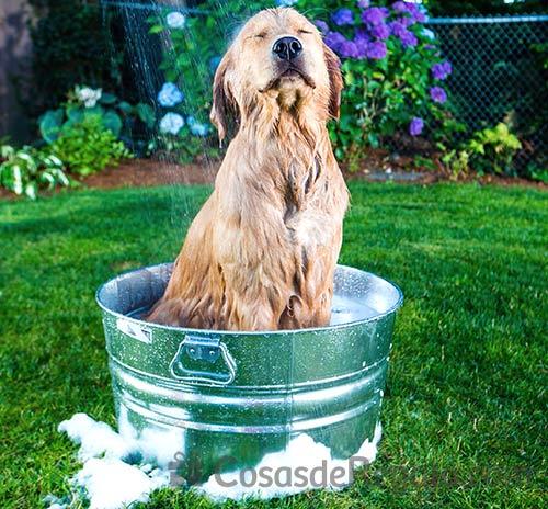 Renovamos nuestra sección de mascotas: todo en accesorios para perros y gatos